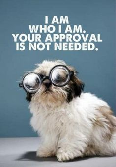 True statement and cute dog :) You must be happy with yourself no one else should have to approve of you.