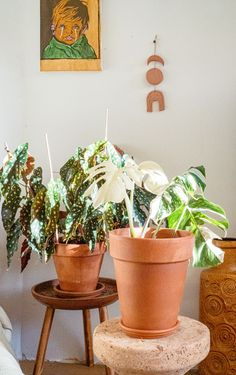 Verzorging bijzondere kamerplanten My Pocket, Begonia, Planter Pots, Gallery Wall, Retro, Mid Century