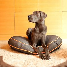 P.L.A.Y. Signature Urban Denim Round Pet Duvet Cover *** Click on the image for additional details. (This is an affiliate link and I receive a commission for the sales)