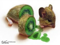 Fruit+and+Vegetable+Animal+Art   Photoshop+Kiwi+Fruit+Mouse+Animal+Vegetable+Hybrid.jpg