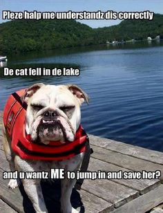 I guess Bubba is not the only Bully with his own life jacket!