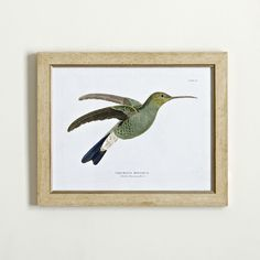 Hummingbird Framed Print III #birchlane