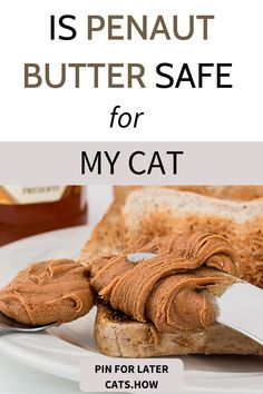 Can Cats Eat Peanut Butter? Peanut butter and jelly or on toast is an all time favorite as a quick Cat Health Care, Cat Diet, Animal Nutrition, Cat Feeding, Quick Snacks, Daily Meals, Cat Food, Eating Habits, Jelly
