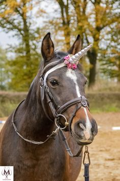 Every horse can be a unicorn . Equestrian Gifts, Equestrian Style, Equestrian Fashion, Bay Horse, Horse Fly, Beautiful Horse Pictures, Beautiful Horses, Unicorn Horn For Horse, Horse Harness
