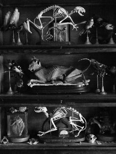 Cat Skeletons.