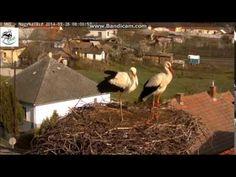 Szép jó reggelt Mindenkinek - Nagyhalász gólyafészek - YouTube Try Again, Youtube, Youtubers, Youtube Movies