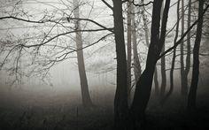 forest-fog-winter_2880x1800.jpg (2880×1800)