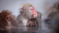 13 Expressive Monkeys Who Will Give You All The Feels.