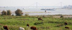 De uiterwaarden van de rivier de Waal bij Tiel, Gelderland. op de achtergrond de Prins Willem Alexanderbrug