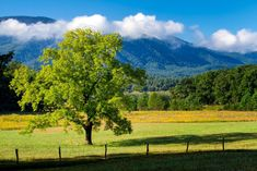Hidden Gem in the Smoky Mountains: The Pearl Harbor Tree in Cades Cove Grand Teton National, Smoky Mountain National Park, Yellowstone National Park, National Parks, Cades Cove, Alaska Travel, Alaska Cruise, Viewing Wildlife, Tennessee Vacation