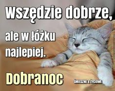 Wszędzie dobrze, ale w łózku najlepiej. Dobranoc #dzienwszystkichswietych Good Night, Good Morning, Weekend Humor, Christmas Tale, Cute Cats And Dogs, Quotes For Students, Man Humor, Motto, Funny Dogs