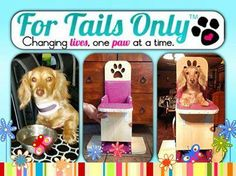 With your generous purchases we were able to donate six chairs to Baily Chairs 4 Dogs in the month of February.