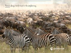 join the in their thousands for the Great The Great Migration, Inspirational Wallpapers, African Safari, Travel Images, Africa Travel, Zebras, Wallpaper S, Where To Go, Beautiful Landscapes
