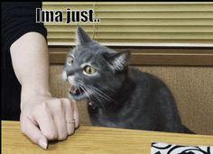 Bite funny pics, funny gifs, funny videos, funny memes, funny jokes. LOL Pics app…