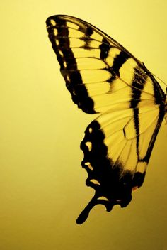 A heart as beautiful and fragile as a butterfly's wings
