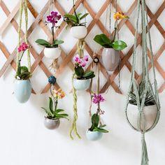 6 zelfmaakideeën voor hangplanten