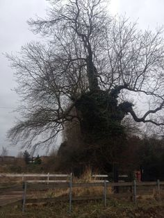 Gnarly old tree near Worksop. Who knows whats its branches have sheltered over the years?