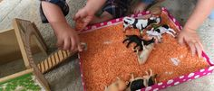 Lentil farm - added in scoops and trucks for transportation - lentils everywhere for weeks but the kids loved it.