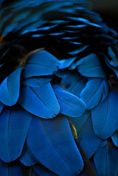 Natures own colours are the most beautiful. I would love to see who these vibrant iridescent indigo feathers belong to.