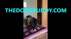 #SpencerTheGoldendoodle reviews the new product #DoorBuddy and gives a overview of the product along with thoughts on the door buddy!