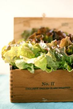 Lettuce-entertain-you centerpiece