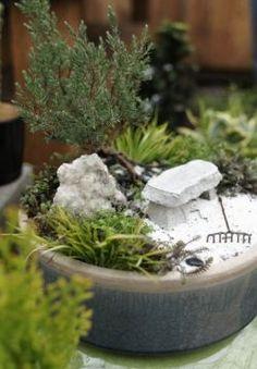 Aquí te dejo unas cuantas fotos de mini jardines para que cojas ideas, hay algunos realmente chulos, esta misma tarde iré al garden a ver qué cositas...