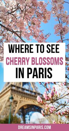 Want to see cherry blossoms in Paris? Here are the best places to see cherry blossoms in Paris in Spring.  Paris cherry blossoms  Paris and cherry blossoms  where to see cherry blossoms in paris  spring flowers in paris  Paris spring flowers  spring flowers photography Paris france  cherry blossom in Paris  Paris cherry blossom spring  cherry blossom tree Paris  cherry blossom Paris tour eiffel  Eiffel tower cherry blossoms  Eiffel tower with cherry blossoms   Paris in spring travel… Paris Travel Tips, Europe Travel Tips, Travel Ideas, Travel Inspiration, Paris In Spring, Springtime In Paris, Paris Things To Do, Romantic Things To Do, Paris Paris