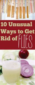 10 DIY ways to get rid of flies: sugar honey and paper bag, apple cider vinegar, lavender oil, onion oil, mint leaf, hand soap, wine, cayenne pepper.