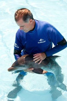 This stranded baby dolphin found by SeaWorld is only a few days old. (Jason Collier/SeaWorld Orlando)