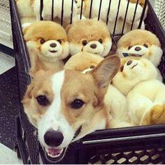 Pin By Pachar Kasemp On KIDs AniMaLS Pinterest Kids Animals - Meet gluta the smiling dog that beat cancer