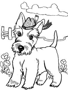 scottish terrier colouring page