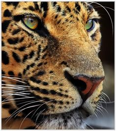 *Beauty in the eyes of the wild