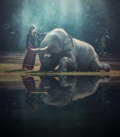Beautiful girl with smiling elephant, elephant village, Surin, Thailand - Beautiful girl with smiling elephant, elephant village, Surin, Thailand