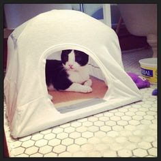 T-shirt Tent Don't throw out your worn out t-shirts -- turn them into a comfy retreat for your fuzzy friend.