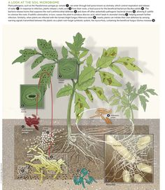 Soil Microbiome from The Scientist