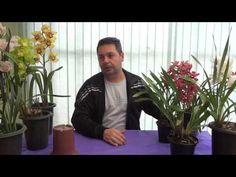 Como Cultivar Orquídea Cymbidium - www.orquidario4e.com.br - YouTube