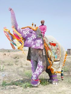Painted elephants of India.