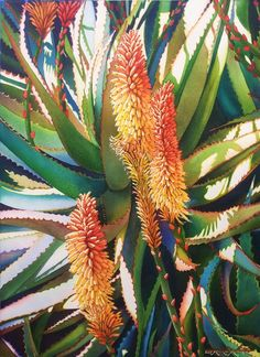Buy Flowers, Plants, & Trees, Paintings & Prints at ArtPal Agaves, Botanical Illustration, Watercolor Illustration, Watercolor And Ink, Watercolor Flowers, Desert Art, Artwork Online, Plant Painting, Acrylic Flowers
