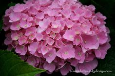 Outdoor Coussin-Pour une Super Gartendeko! Action 4 Pour 3 Rose /& hortensia
