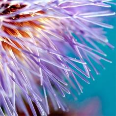 Macro Flowers Abstract by Gareth I Davies, via Flickr