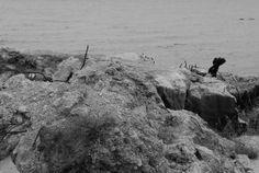 27 Bateria Artylerii Stałej powstała a gruzach przedwojennych stanowiska #MiastoHel #pomorskie #bunkry #wakacje