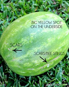 Tips For Picking the Best Watermelon!! Great ways to know if you picked a sweet watermelon or not!