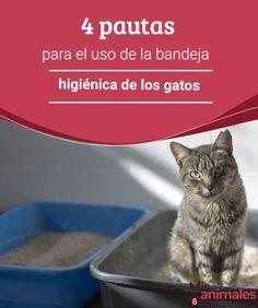 4 pautas para el uso de la bandeja higiénica de los gatos Poner una bandeja higiénica a tu gato puede parecer muy sencillo, pero si no tienes en cuenta una serie de consejos, es posible que tu felino ni la use. #gatos #higiene #arena #consejos