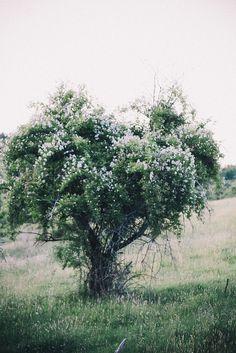 Gorgeous tree.