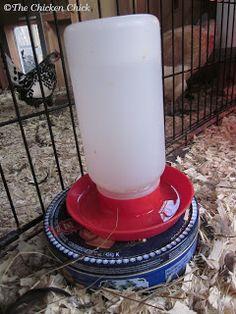 Chicken Coop - DIY Cookie Tin Waterer Heater. Under $10, & 10 minutes in 3 steps!