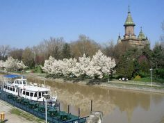 Spring in Timișoara, Bega canal Romania, Live, Spring, Europe, Pictures