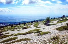 #montventoux #treelovers #tree #gardenlovers #paysagemagnifique #naturelovers #naturephotography #nature_perfection #instanature #landscape_captures #landscapephotography #instamood #instamoment #instapic #nikon #france #mountain #sommet #sky