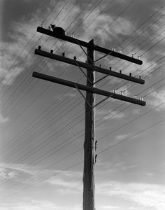 Cat Sitting On A Power Line Telephone Pole Stranded Alone Outdoor, 1940's   © Corbis
