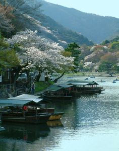 Awesome Spring scenery in japan