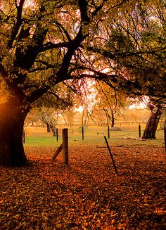 ~~Autumn Day ~ Woodside, Adelaide Hills, South Australia by Julie Thomas~~